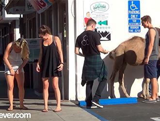 Camel-Toe-Prank-tub